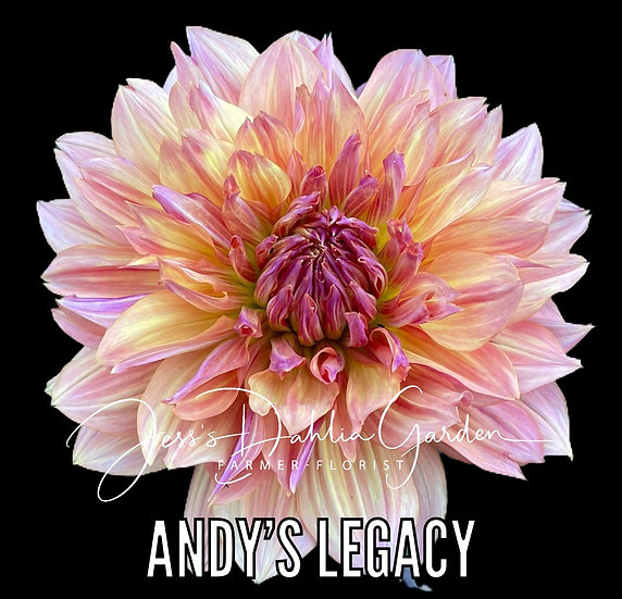 Andy's Legacy