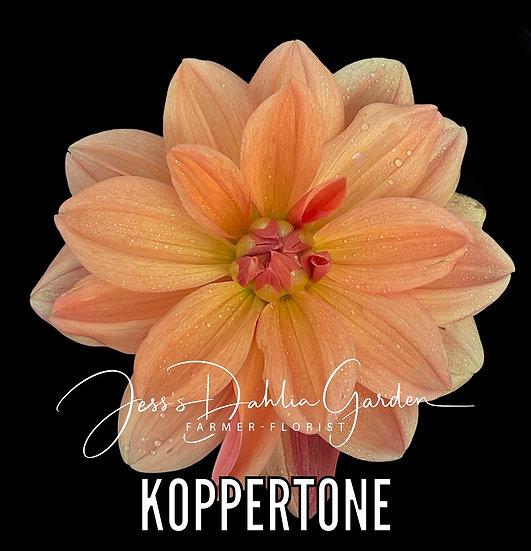 Koppertone