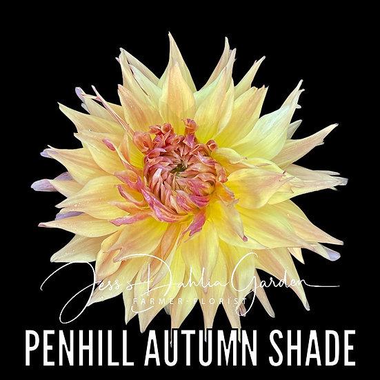 Penhill Autumn Shade
