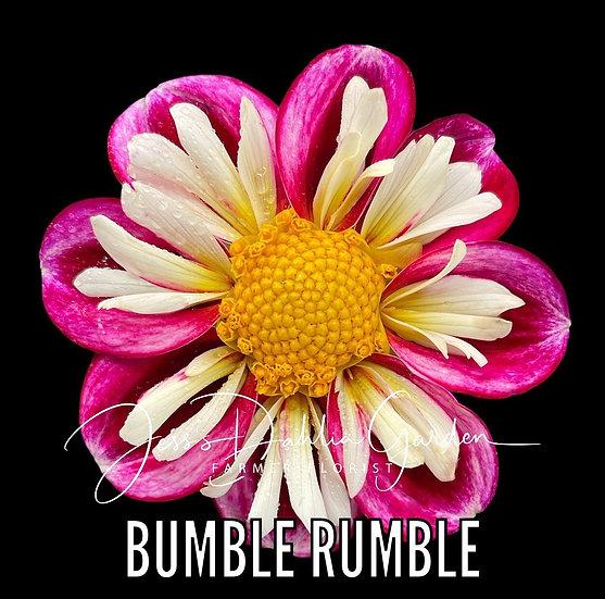 Bumble Rumble