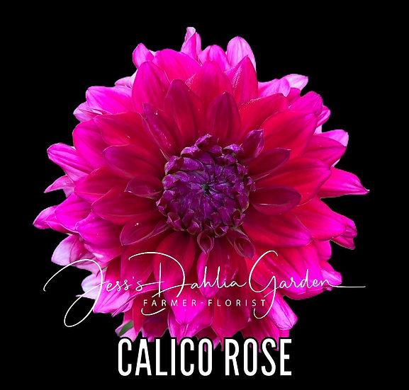 Calico Rose