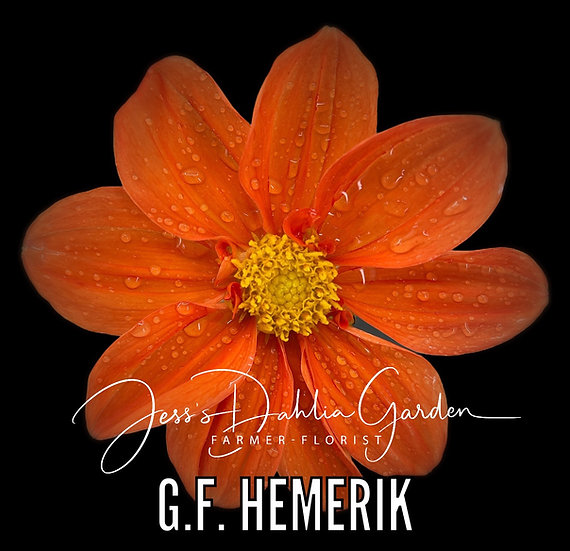 G.F. Hemerik