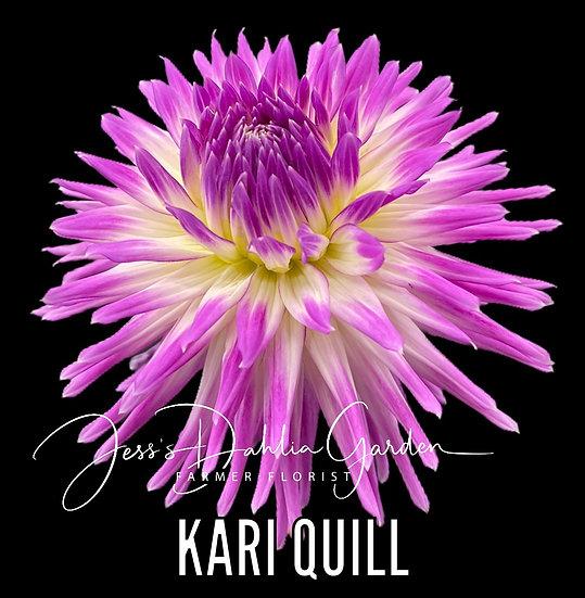 Kari Quill