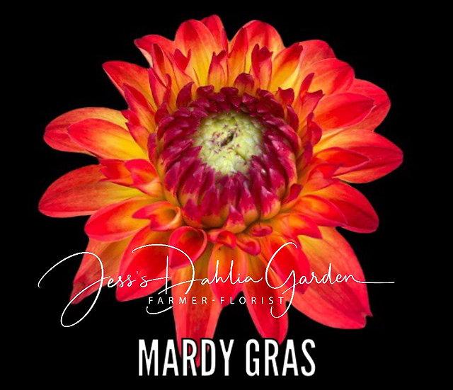 Mardy Gras