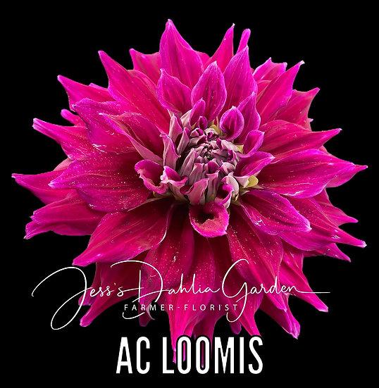 AC Loomis