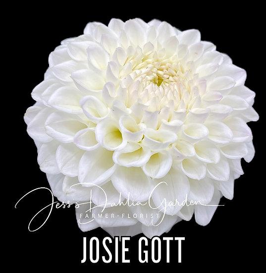 Josie Gott