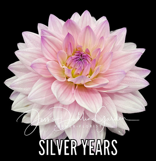 Silver Years