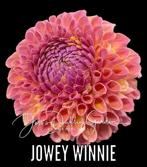 Jowey Winnie