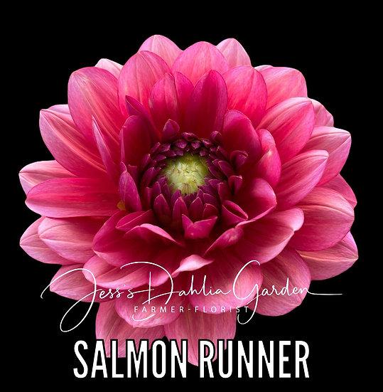 Salmon Runner