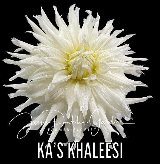 KA's Khaleesi