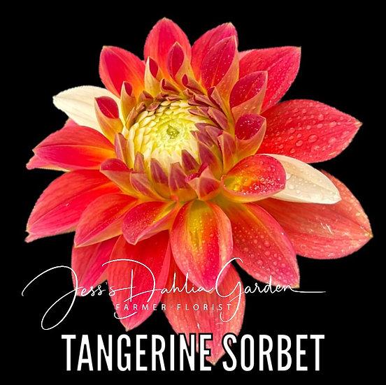 Tangerine Sorbet