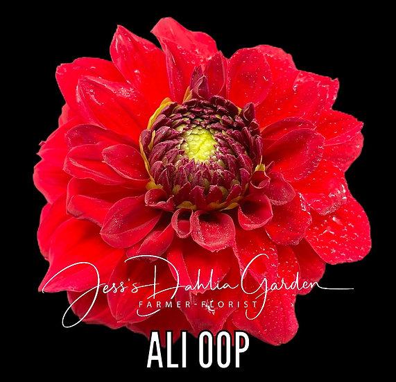 Ali Oop