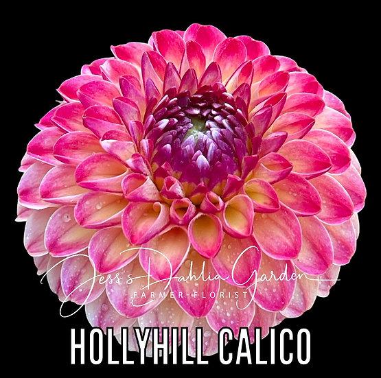Hollyhill Calico