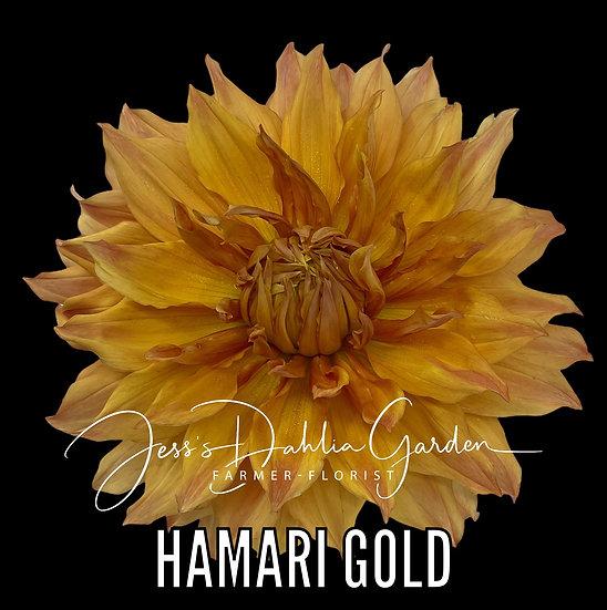 Hamari Gold