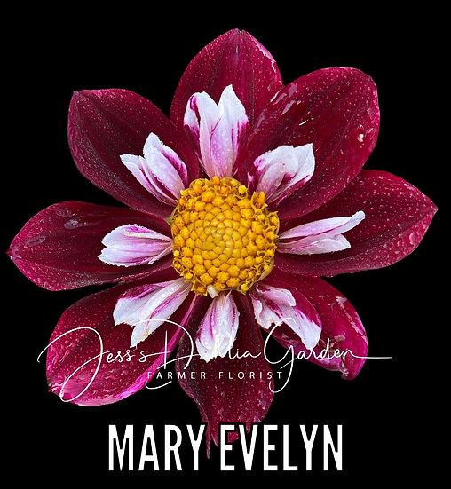 Mary Evelyn