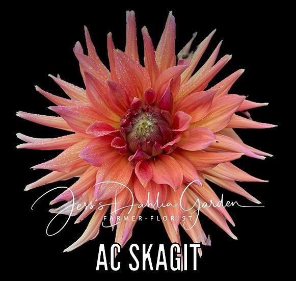 AC Skagit