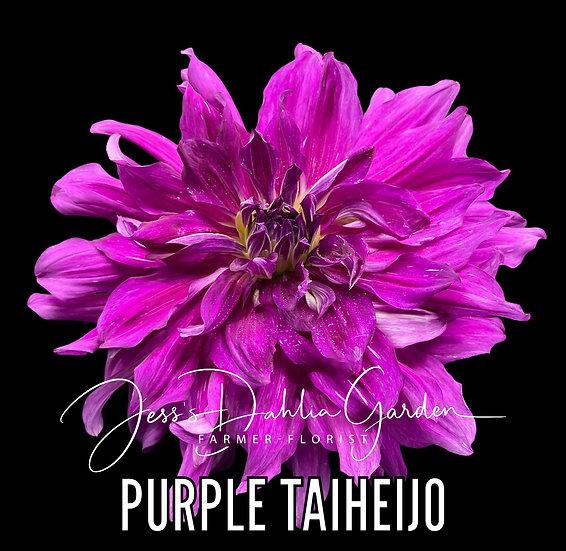 Purple Taiheijo