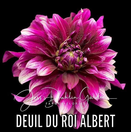 Deuil Du Roi Albert