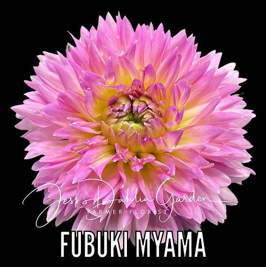 Fubuki Myama