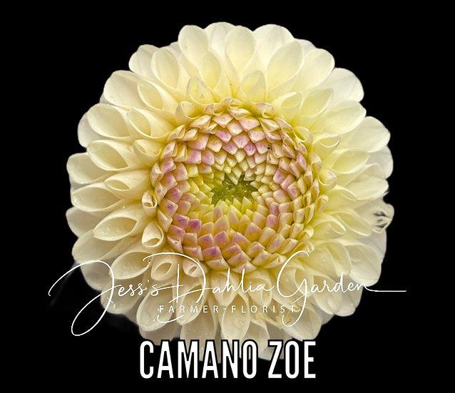 Camano Zoe