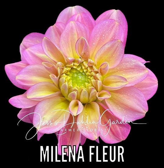 Milena Fleur