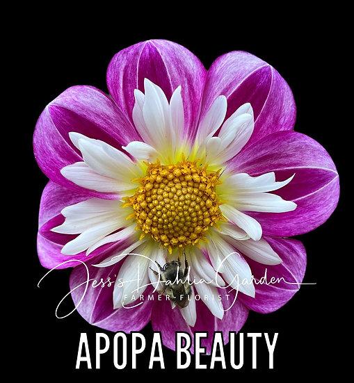 Apopa Beauty