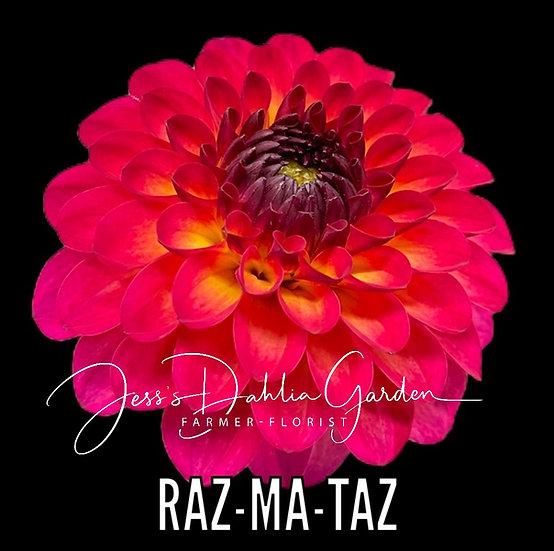 Raz-Ma-Taz