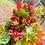 Thumbnail: QUINOA - REDHEAD