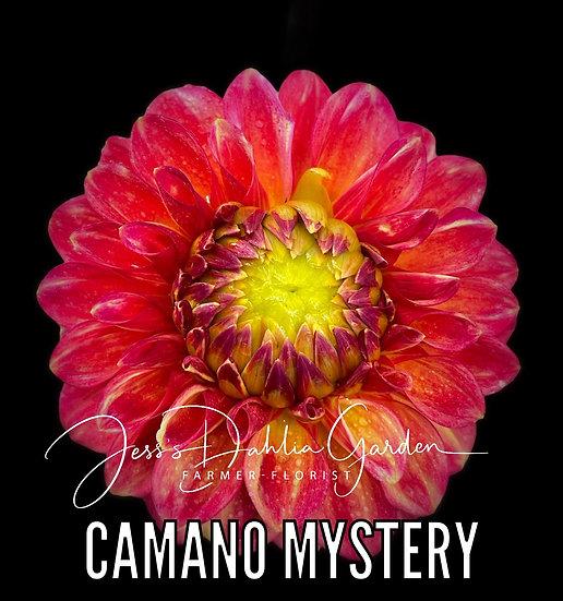 Camano Mystery