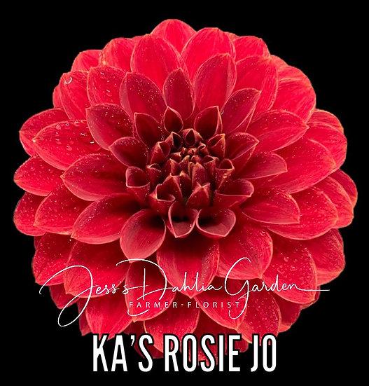 KA's Rosie Jo