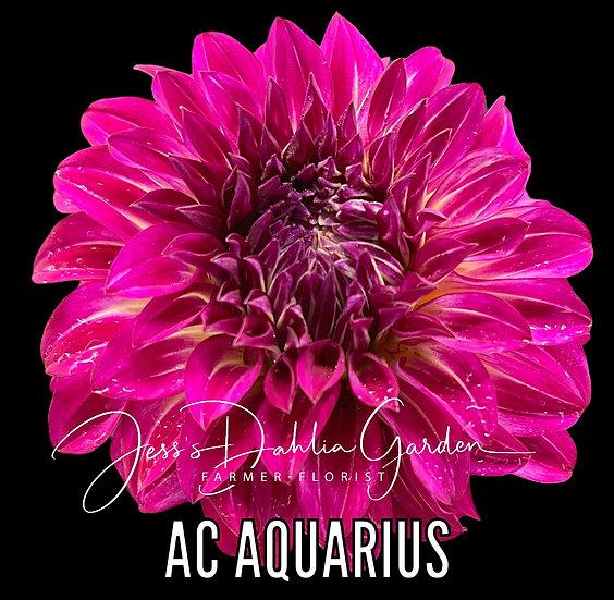 AC Aquarius