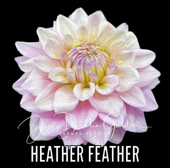 Heather Feather
