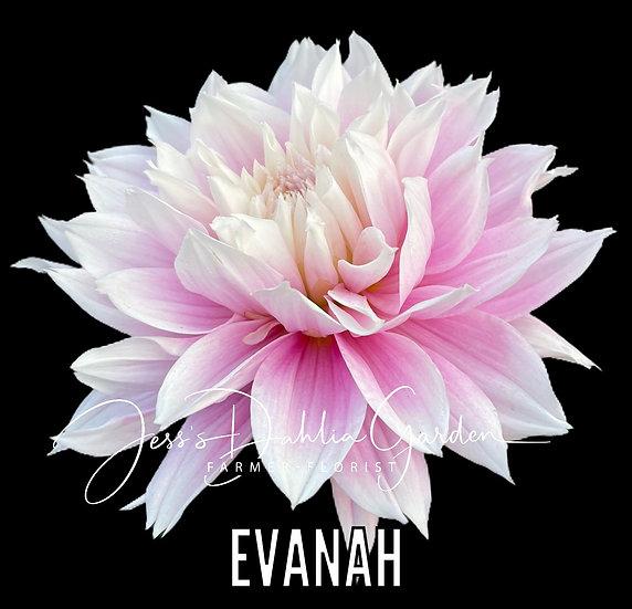 Evanah