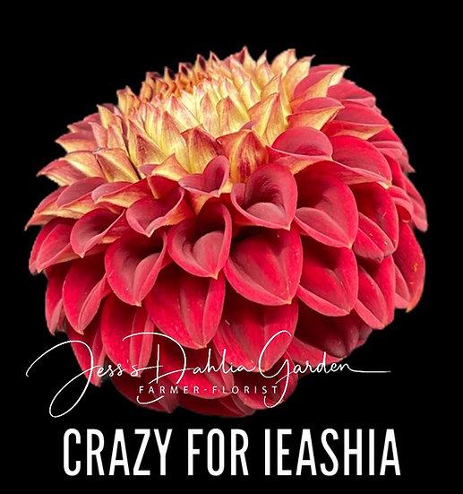 Crazy for Ieashia