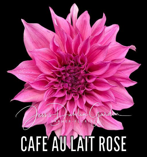 Cafe Au Lait Rose