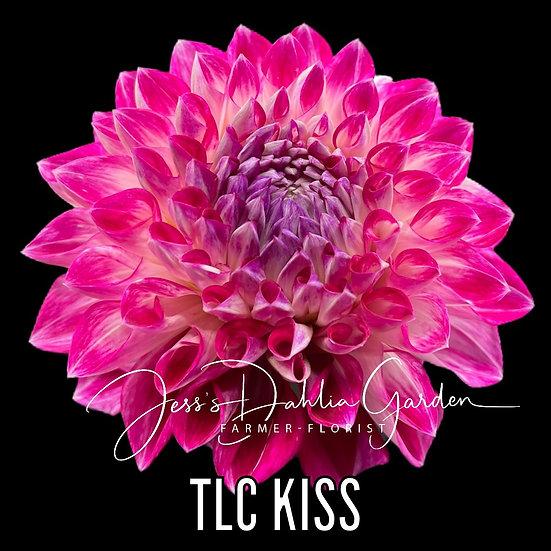 TLC Kiss