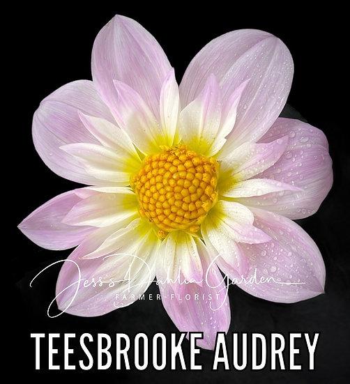 Teesbrooke Audrey