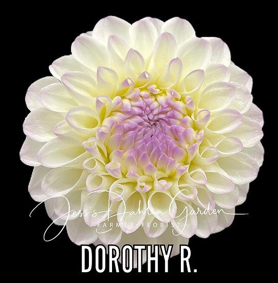 Dorothy R