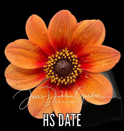 HS Date