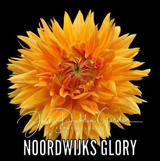 Noordwijks Glorie