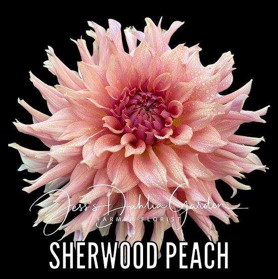 Sherwood Peach