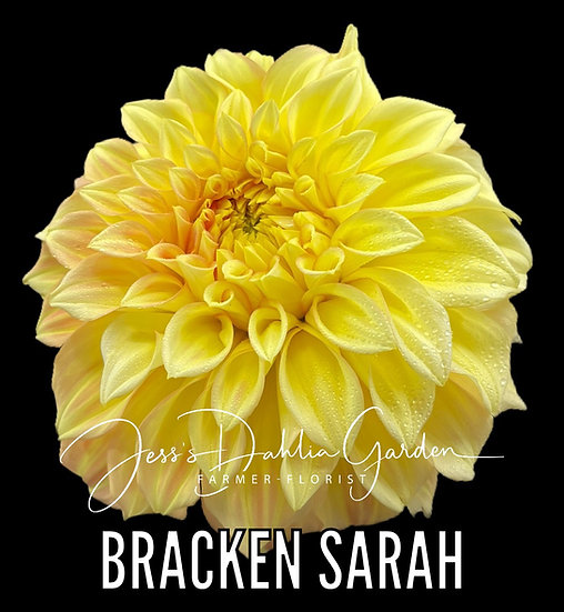 Bracken Sarah