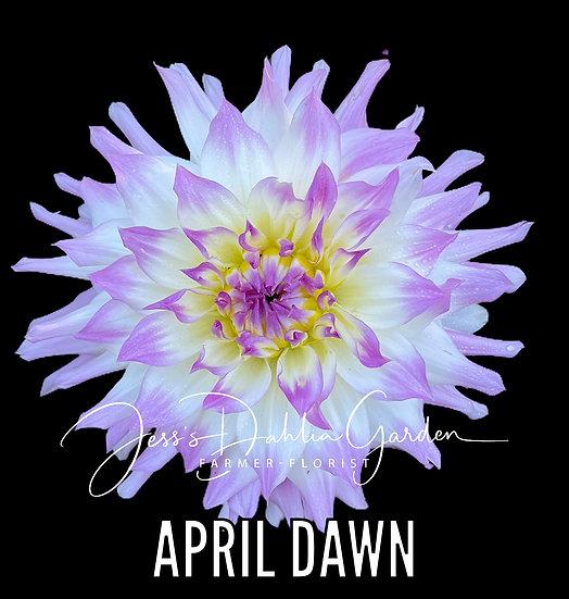 April Dawn