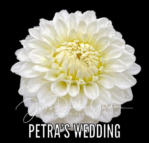 Petra's Wedding