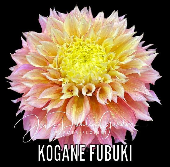 Kogane Fubuki