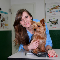 СУКАЧОВА АЛІНА СВЯТОСЛАВІВНА  - лікар ветеринарної медицини