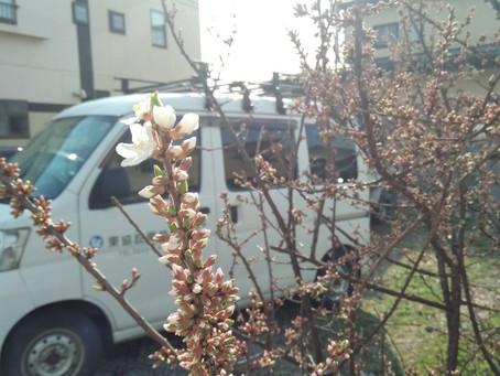 桜🌸??梅??