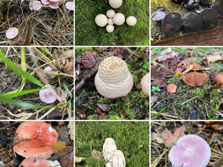 A fungi pilgrimage