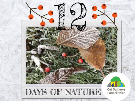 The 12 Days of Nature