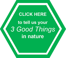 3 good things.png